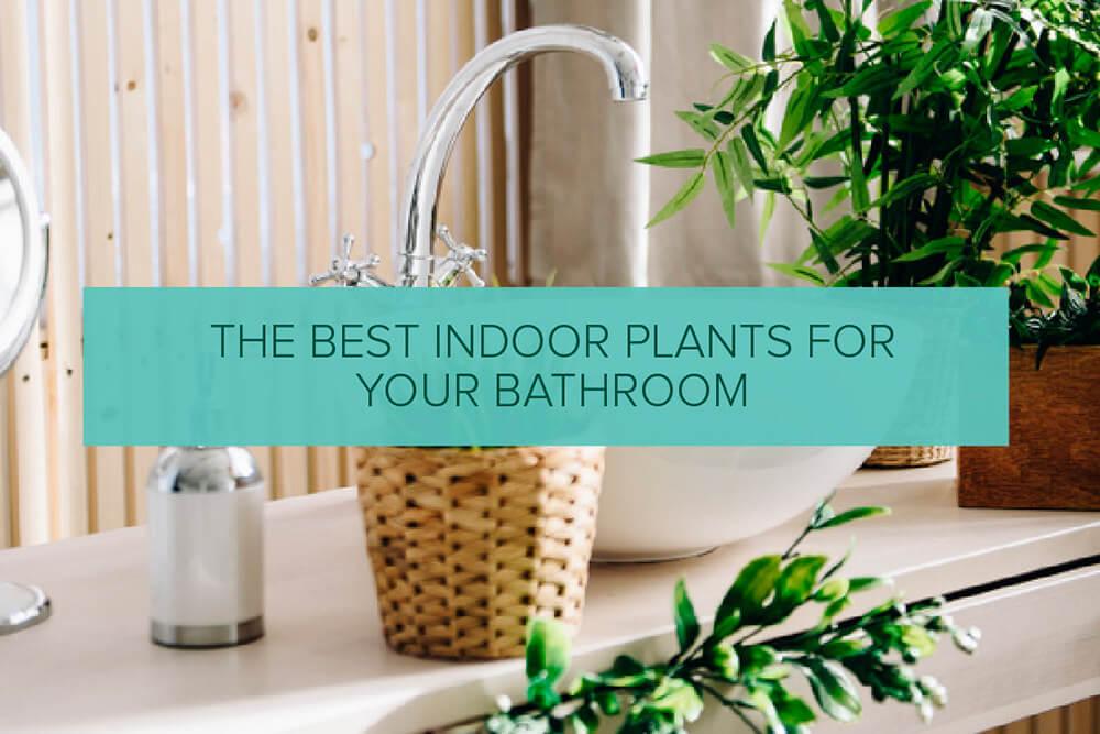 The Best Indoor Plants for Your Bathroom