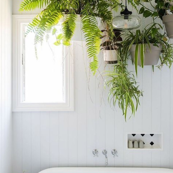 Add life with house plants